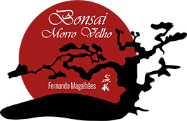 Bonsai Morro Velho
