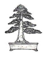 bonsai-estilo-chokan