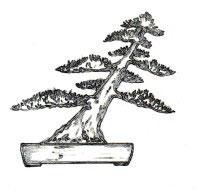 estilo bonsai shakan